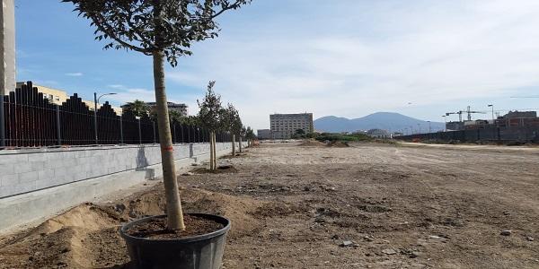 Napoli: Parco della Marinella, piantumati oggi i primi 19 alberi